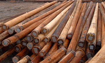 All-natural hardwood utility poles 01.